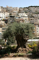 Фотографии Иерусалима - Город Давида (Старый город Иерусалима) Израиль, картинки, фото, путешествия, Фотография