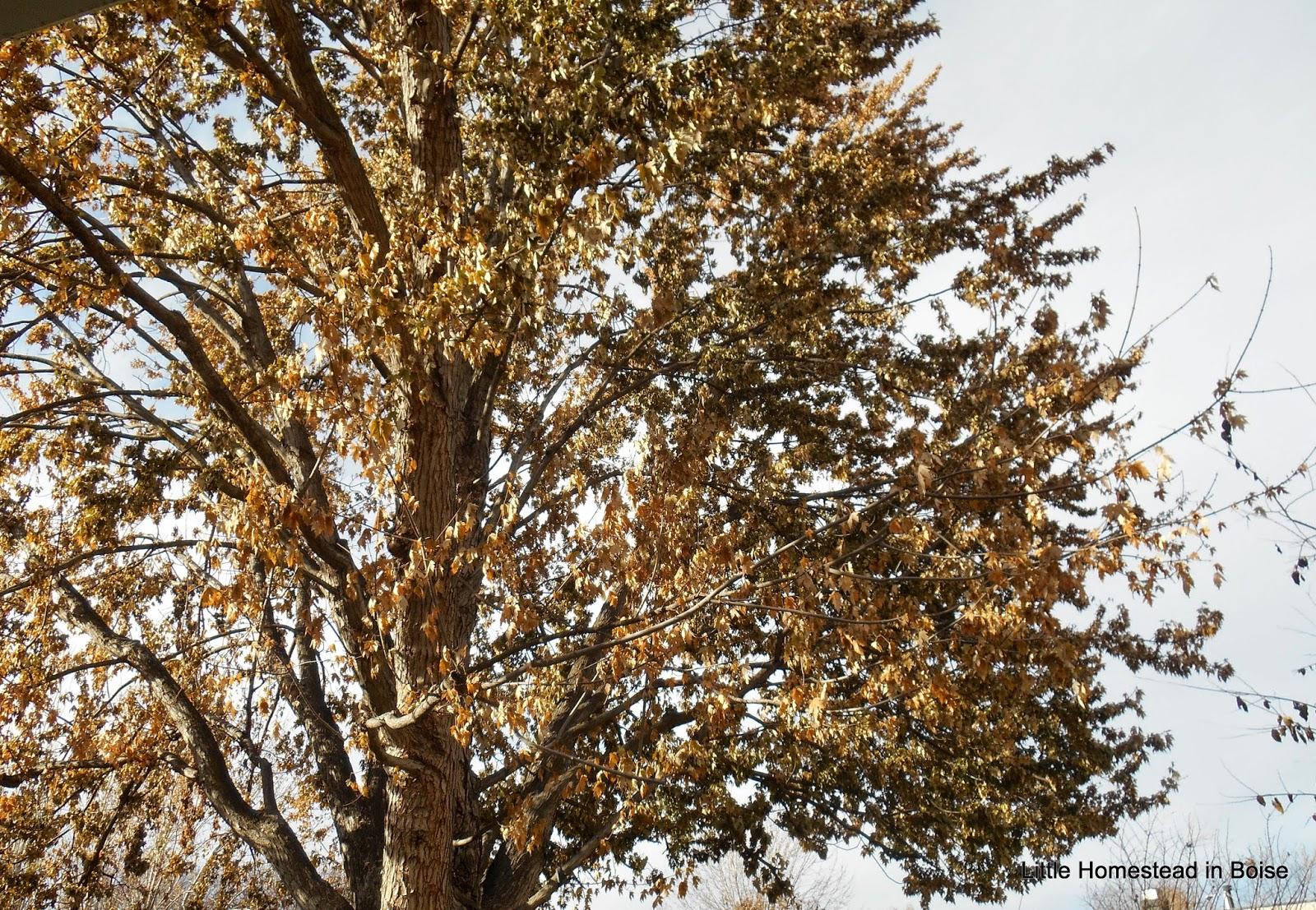 Fastest Way Rake Leaves