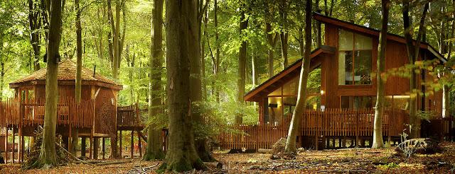 طبيعة لمنازل الغابات thcaro5.jpg