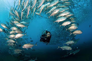 All About Diving in Tulamben Beach Bali