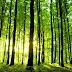 Колко са дърветата на Земята? (видео)