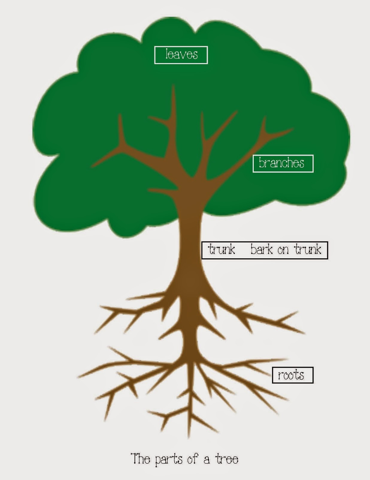 Esl And Close Reading A Work In Progress Parts Of A Tree Kindergarten Lesson