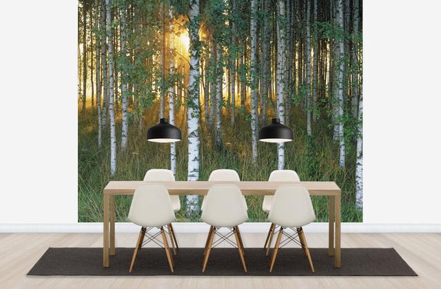 Koivu Tapetti Koivutapetti Koivumetsä Valokuvatapetit Metsä Sunbeam through Birch Forest