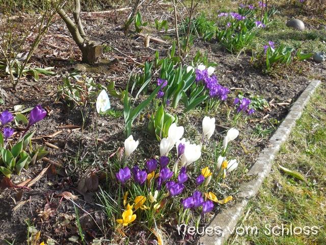 12 von 12 (März 2017)- neuesvomschloss.blogspot.de