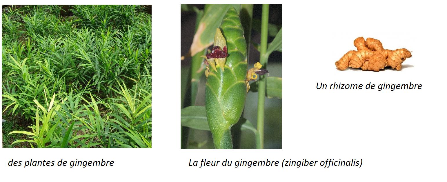 Graines De Fleurs Qui Poussent Très Vite sweet random science: 10 fruits tropicaux mangés = 10
