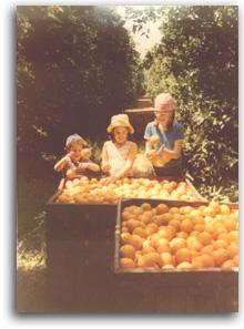 קטיף תפוזים, מאלבומה של משפחת בן משה