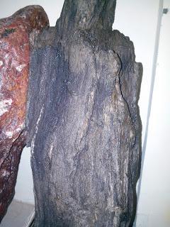 Fosil pohon yang sudah membatu