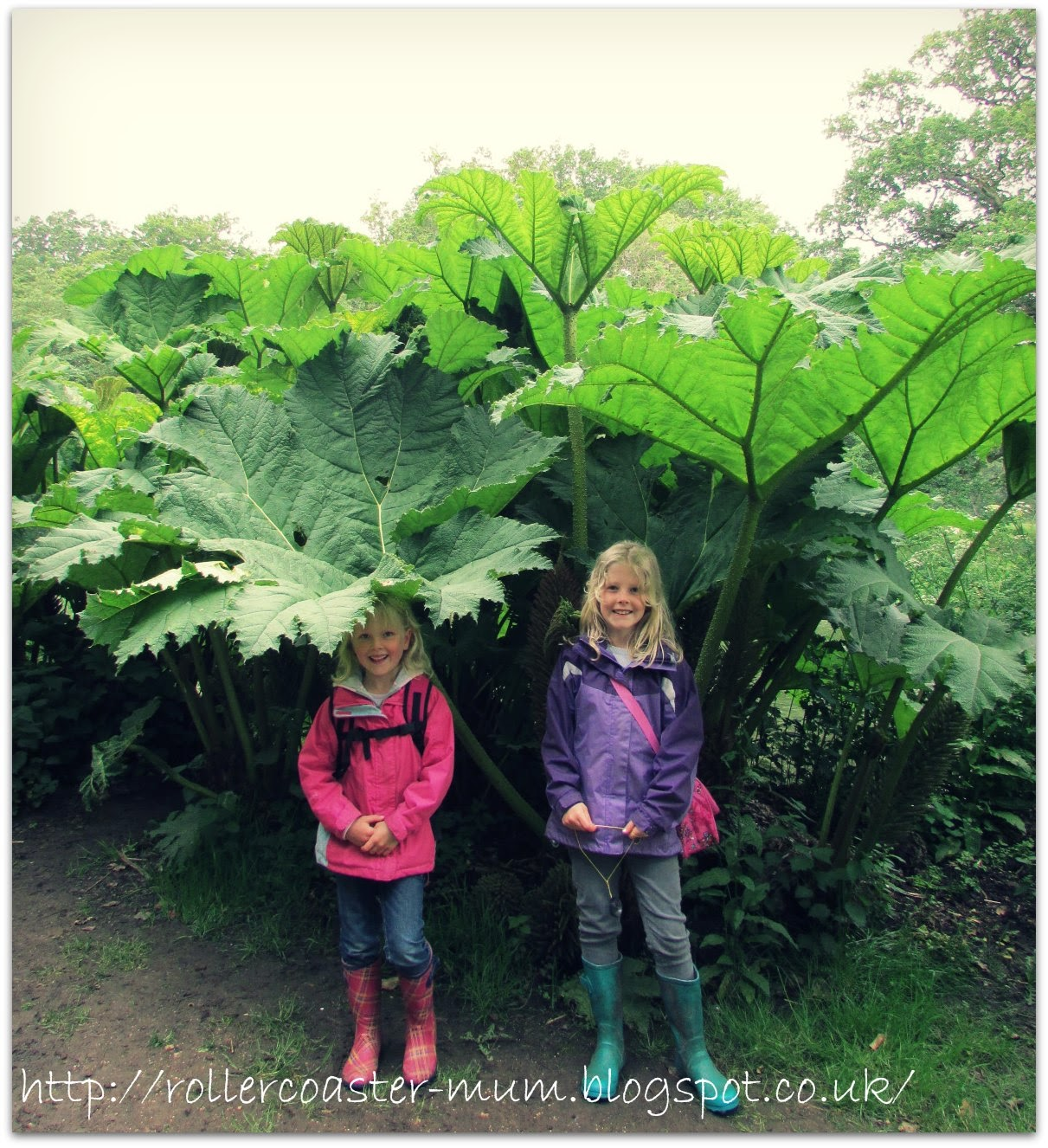 Sheltering under the Gunnera leaves, The Vyne, National Trust