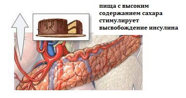 Механизм действия инсулина