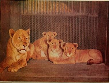 The Lion Flock - a Short Story