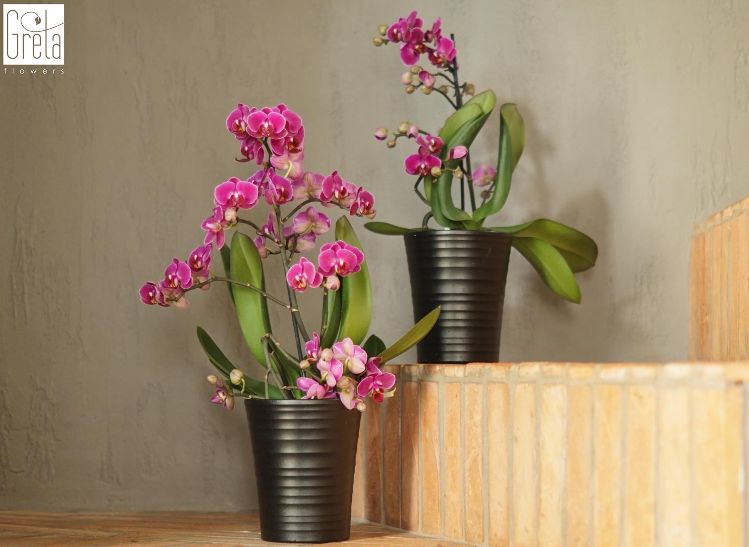 Rośliny oczyszczajace powietrze