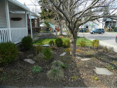 Birch Cliff Toronto Scarborough Front Yard Spring Garden Cleanup After by Paul Jung Gardening Services a Toronto Gardening Company