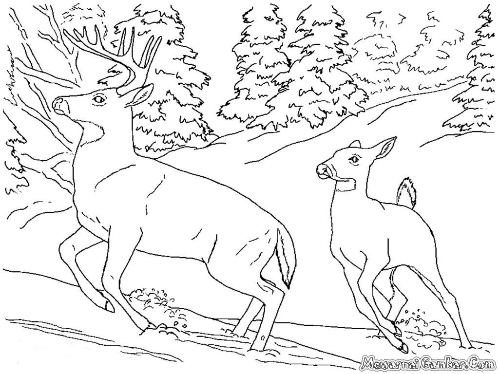 Kumpulan Gambar Sketsa Hewan Di Hutan