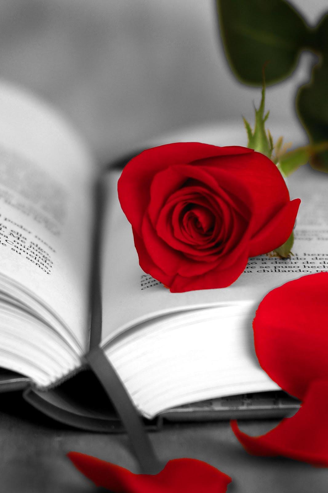 Sobre Colores: Libros, rosas, colores