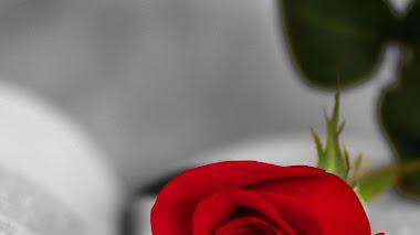 Libros, rosas, colores