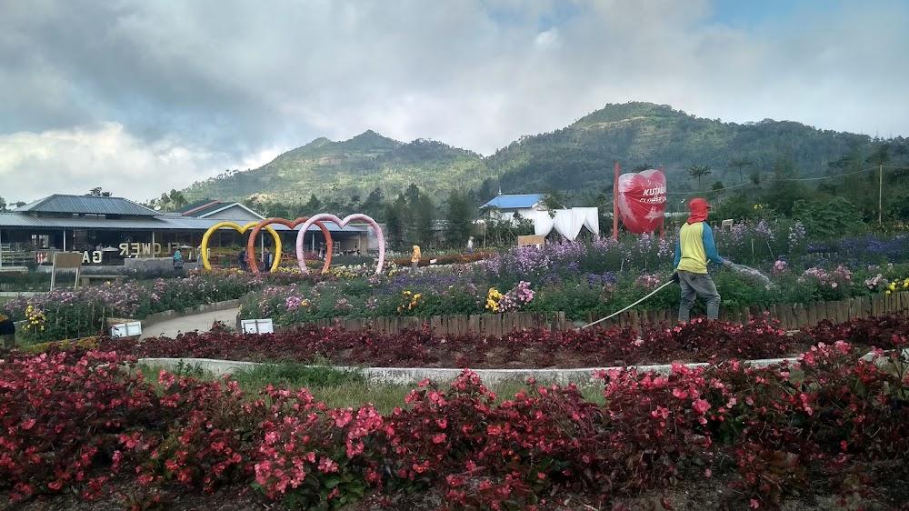 [CoC Regional: Lokasi Wisata] Nyasar, Sampai Kutabawa Flower Garden