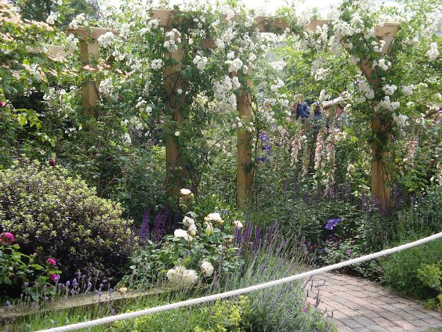 Roger Platts, róże na pergoli