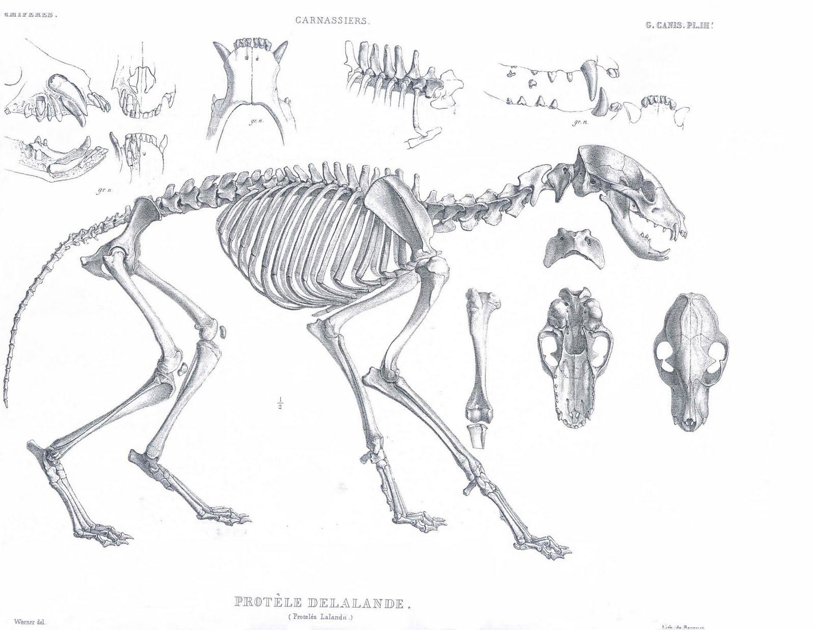 Animal Anatomy Comparative Bear Foot