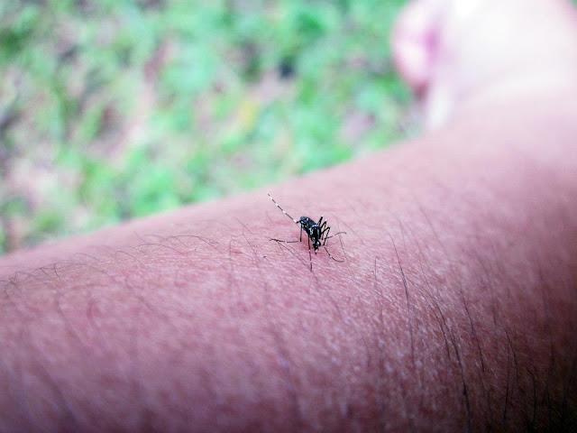 Cuma bila berada di kebun memang kena tahanlah dengan gigitan serangga seperti kerengga, semut dan nyamuk. Digigit serangga ketika berada di kebun itu biasa!
