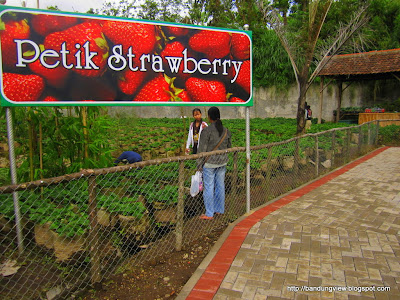 petik strawberry floating market lembang