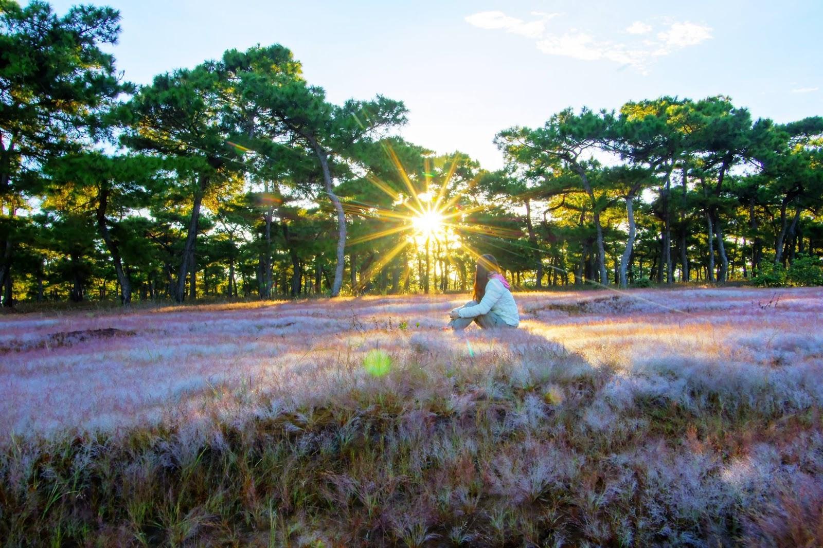 Đầu đông đi Gia Lai ngắm đồi cỏ hồng