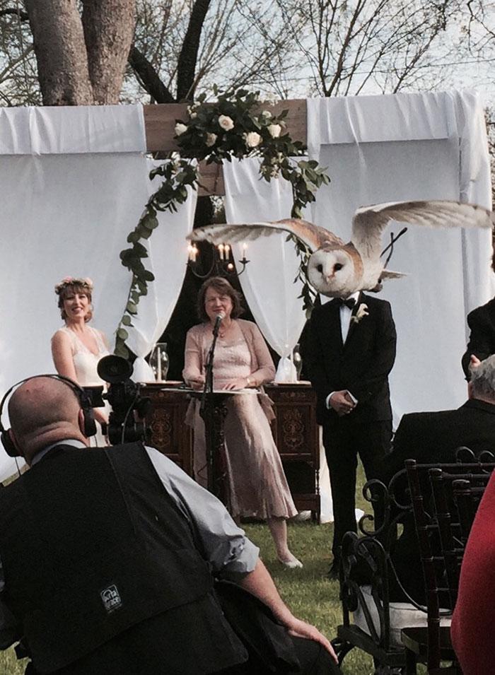 Woman Marries Owl