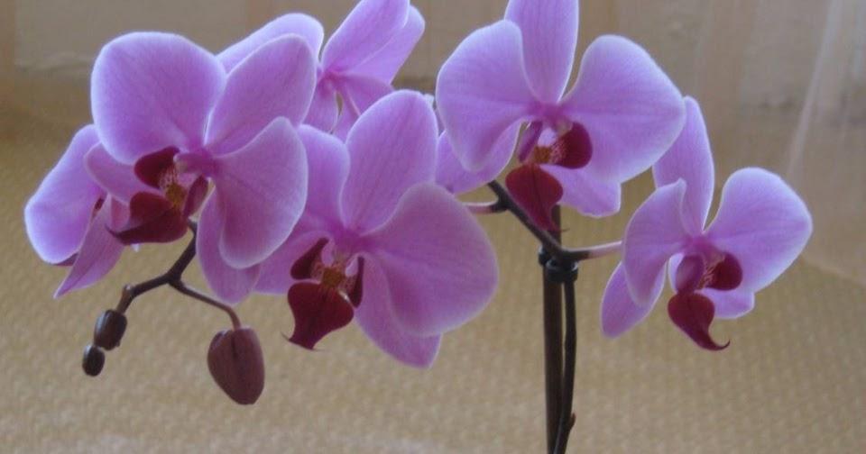 Орхидеи мелкоцветковые