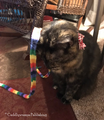 Real Cat Paisley with rainbow ribbon on her ear_Feb 2018