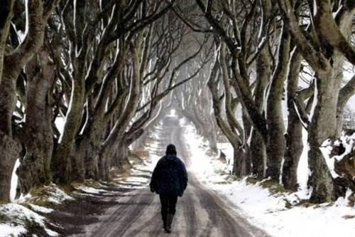 Game of Thrones: algumas cenas de Winterfell são gravadas no Parque Tollymore Forest