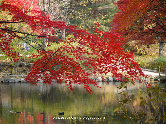 red leaves on a tree by a river