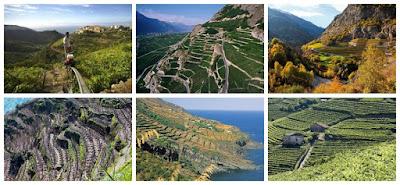 viticoltura eroica italia
