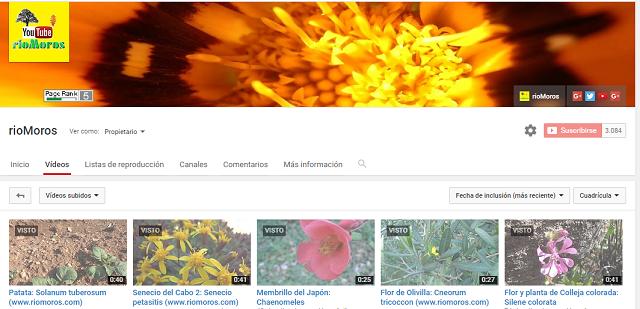 Canal de Youtube de rioMoros
