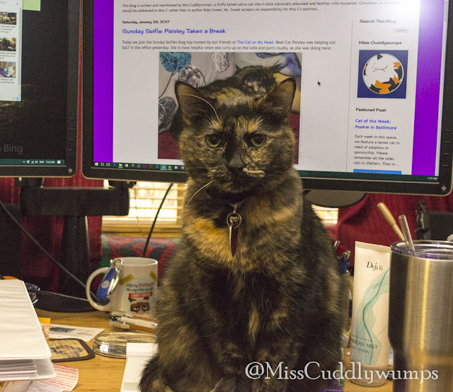 Paisley, tortoiseshell cat, on desk in front of monitor