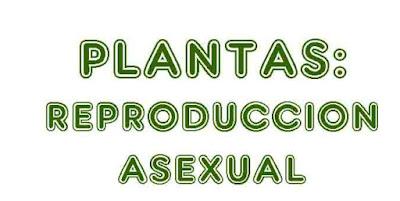 https://cplosangeles.educarex.es/web/quinto_curso/naturales_5/plantas_asexual_5/plantas_asexual_5.html