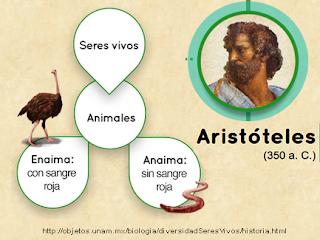 http://objetos.unam.mx/biologia/diversidadSeresVivos/historia.html