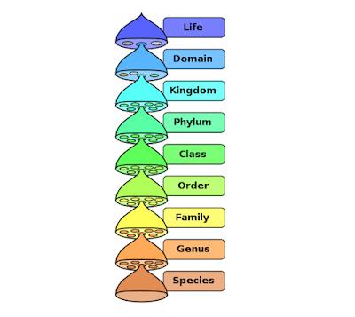 Tingkatan takson makhluk hidup
