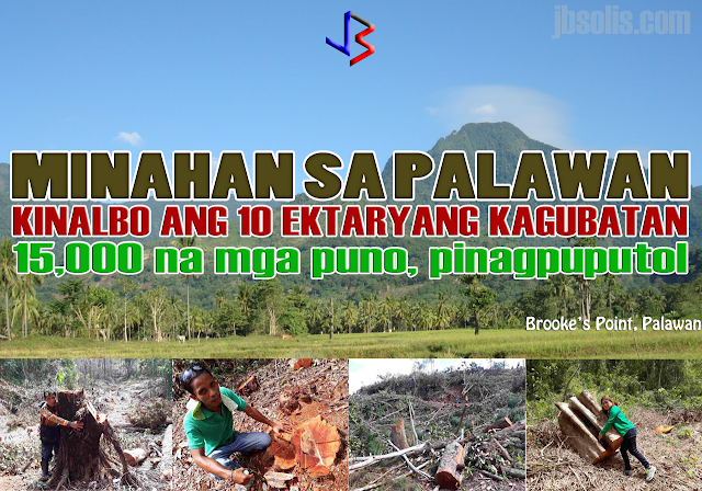 "A mining firm felled thousands of trees in Brooke's Point town in Palawan province just days after former Environment Secretary Gina Lopez was rejected by the Commission on Appointments, a local official confirmed. The clearing covered more than 10 hectares of old growth forests in the town.  ""I don't have the exact figure but those were thousands of trees. They cut down big and small trees alike. Some of those were probably centuries old."" Brooke's Point Mayor Jean Feliciano said in a phone interview. Feliciano said the trees were located in a protected area of Mount Mantalingajan, which also serves as a watershed that supplies potable water to 5 villages.  The mining firm in question was identified as Ipilan Nickel Corporation, affiliate of Global Ferronickel Holdings, Inc. The company was granted a tree cutting permit in May 2016 but was cancelled in December. The company was among the mining firms that Lopez had ordered closed. Their ECC had already been canceled when they conducted the cutting operation. They don't even have mayor's and business permits,"" Feliciano said.  The provincial government is preparing to file illegal logging charges against the company and its officers. The Palawan government had previously filed charges against eight Ipilan Mining Corp. personnel involved in the tree cutting for violation of Republic Act No. 9175 (Chainsaw Act of 2002). They were able to arrest the eight chainsaw-wielding miners who mowed down the area but their companions had fled.  The mining firm has since barred local officials, policemen and environment officials from entering the area. The town's mayor had to bring with her marines because the local police are afraid from threats of lawsuits filed against them.  Lopez, for her part, took to social media to vent out her disdain over the ""massacre"" of the town's trees. Lawmakers earlier this month rejected the appointment of Lopez, who cracked down on alleged unsafe mining practices during her 10 months in office. She posted images of the aftermath on her Facebook account, showing the remnants of the cut down trees, including some timber that were left after the mining personnel fled from the scene.  Her successor, Roy Cimatu, promised to investigate the logging activities in Brooke's Point. ""I will immediately convene my staff and look into this immediately,"" Cimatu said in a separate interview.  Global Ferronickel President Dante Bravo has issued a statement denying that its affiliate Ipilan Nickel, lacked the necessary special tree cutting permits and noted that the cancellation of the permit is still subject of a pending motion for reconsideration. added that the company also has an outstanding SEP (Strategic Environment Plan) clearance issued by the Palawan Council for Sustainable Development and a Mineral Production Sharing Agreement with the government. Provincial officials sought on Wednesday the cancellation of the company's SEP Permit from the provincial regulatory body."