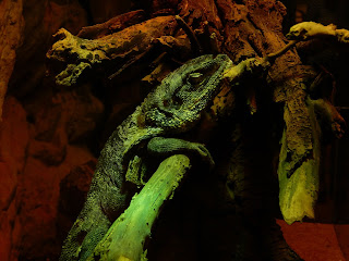 リヴォルノ水族館の爬虫類