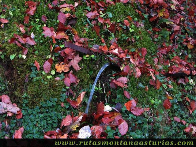 Ruta Bosque de Peloño: fuente