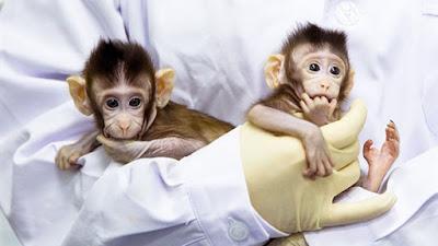 استنساخ القرود تهديد للجنس البشري