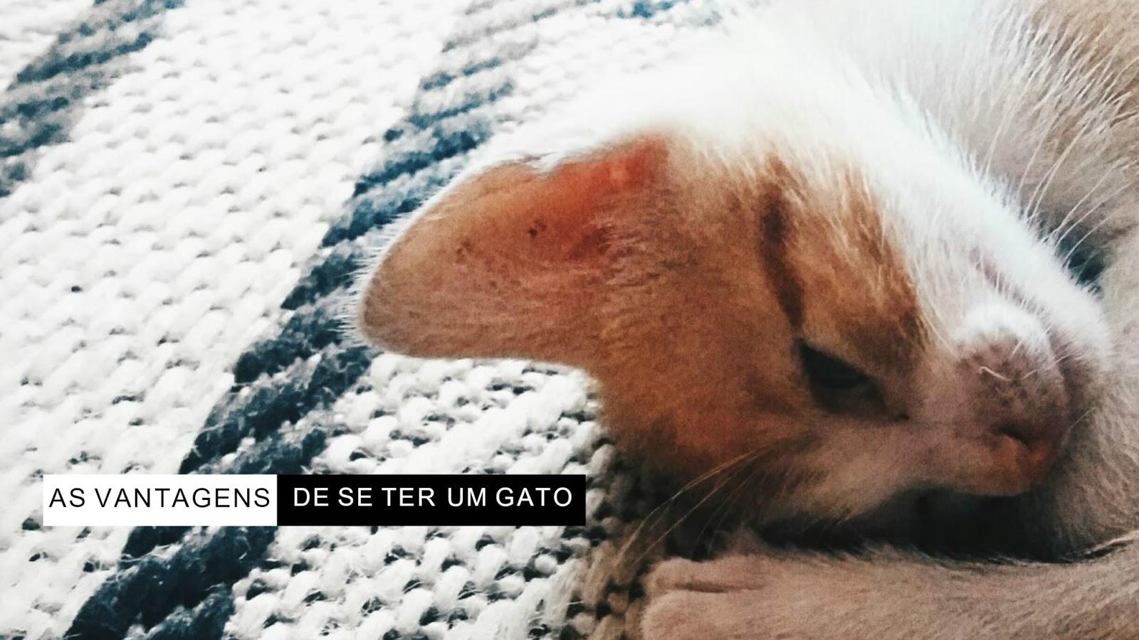 SEIS VANTAGENS DE SE TER UM GATO EM CASA | BLOG CONFIDENT