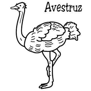 Avestruz Para Colorear Dibujos Infantiles Imagenes Cristianas