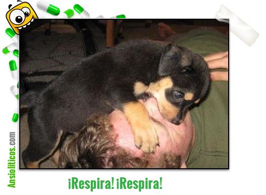 Chiste del Cachorro Salvavidas