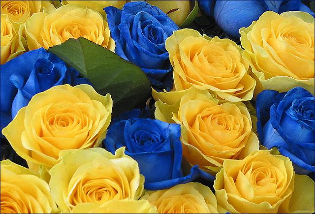 Картинки по запросу квіти україни