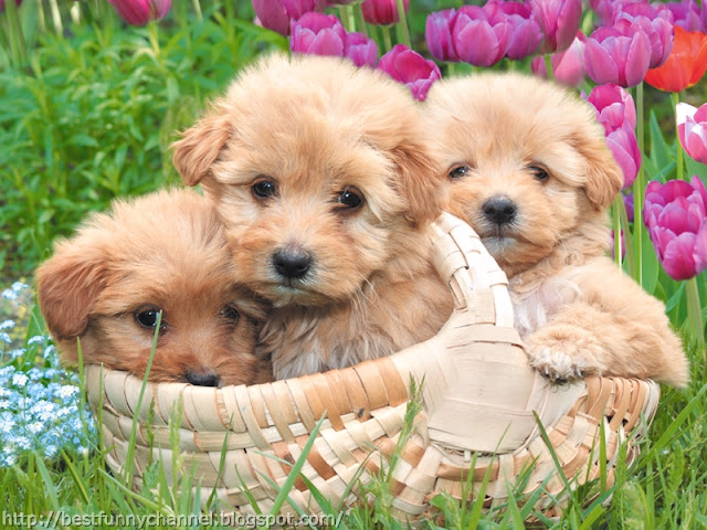 Three cute puppies.