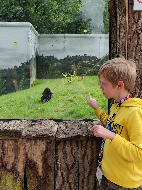 zoo at Drayton Manor Park #DMP
