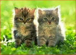 Cara Memilih Makanan Kucing Persia Yang Baik