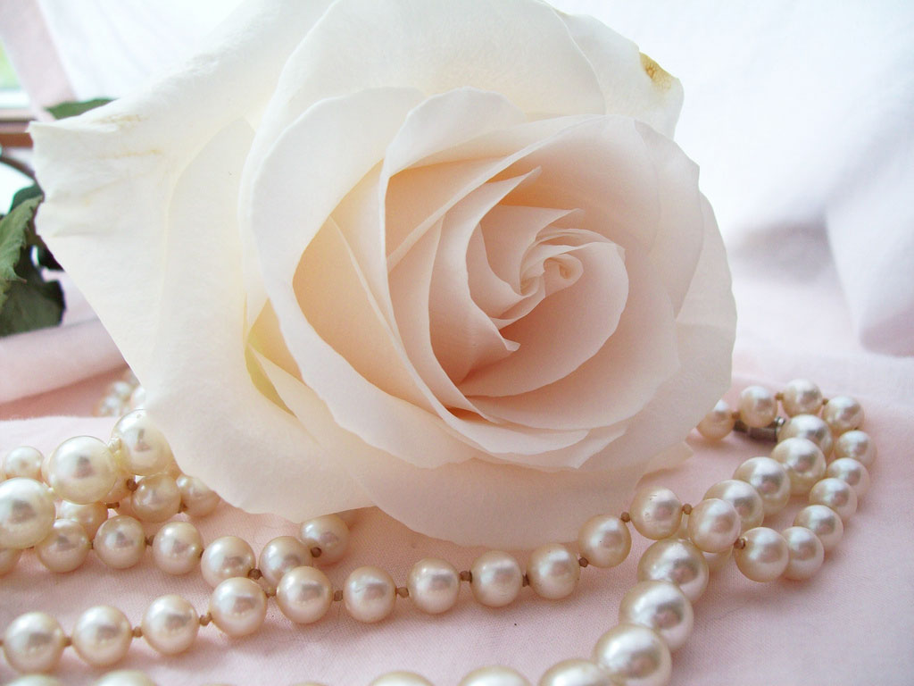Wallpapers pearls with flowers wallpapers for White pearl