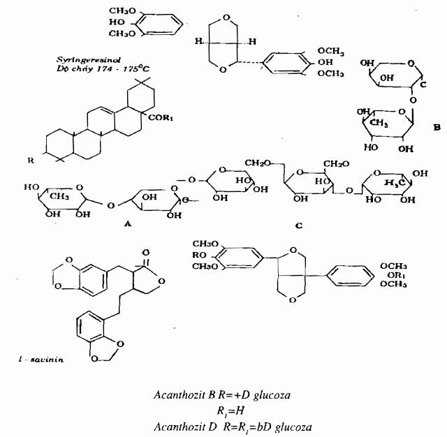 Thành phần hóa học Ngũ Gia Bì Gai -  Acanthopanax aculeatus - Nguyên liệu làm thuốc Chữa Bệnh Tiêu Hóa
