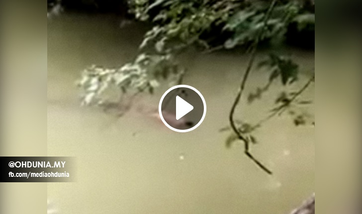 Gempar, Buaya Hantar Balik Mayat Syarifuddin Kepada Orang Kampung (Video)